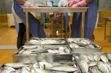 peracetic acid fish seafood