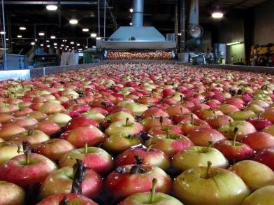 peracetic acid organic food processing