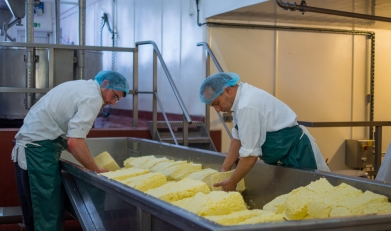 peracetic acid cheese dairy processing