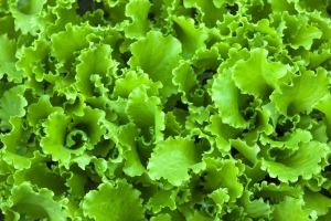 peracetic acid leafy greens